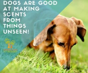 Dog-noses-follow-the-scent