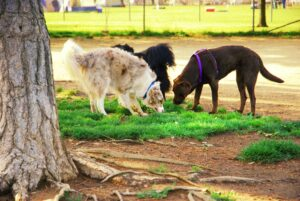 Maplewood South Dog Daycare Services